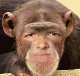 Owen Monkey Face.jepg